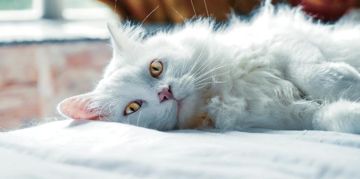 Nos animaux domestiques, comment soigner une petite blessure ?